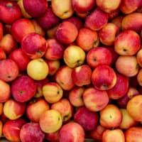 appelen (100 kg)