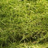 herbe (750 kg)
